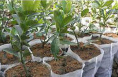 rayson nonwoven,ruixin,enviro-Anti Aging Pupular Agricultural Ground Cover Black White Color Spunbo-1