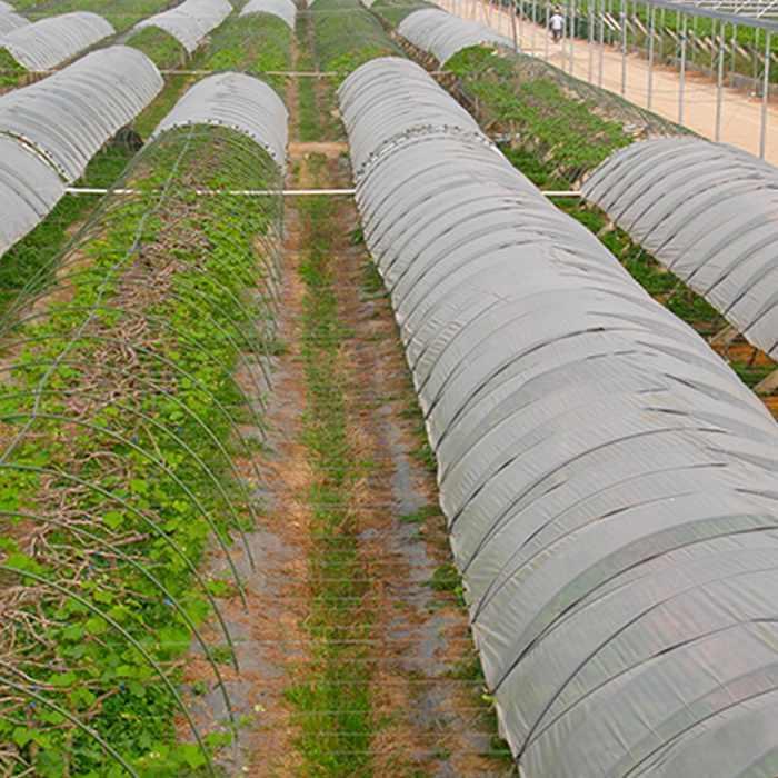 Tissu non tissé de couverture végétale d'ouatine d'hiver