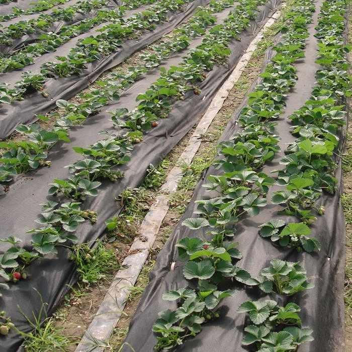 Pacciamatura biodegradabile in pvc per agricoltura