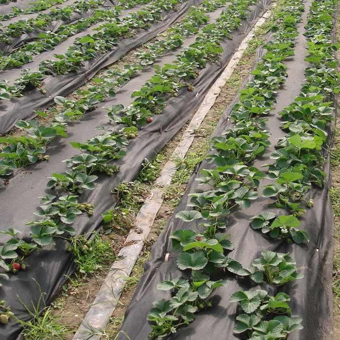Application non-tissée de largeur supplémentaire sur l'applicateur de l'agriculture / 3m