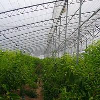 Tunnel Greenhouse UV Resistance Non Woven Fabric Cover