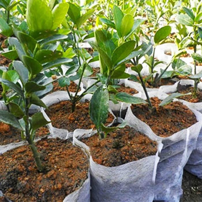 100% PP, atmungsaktiv, hergestellt in China, hält nassen Vliesstoff Mulch