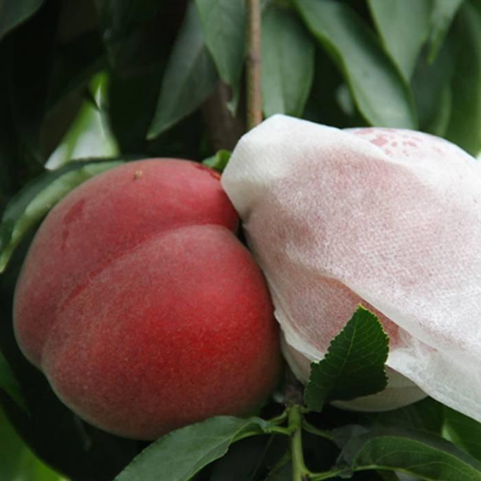 الفاكهة غطاء البولي بروبلين سبوندبوند غير المنسوجة حقيبة النسيج