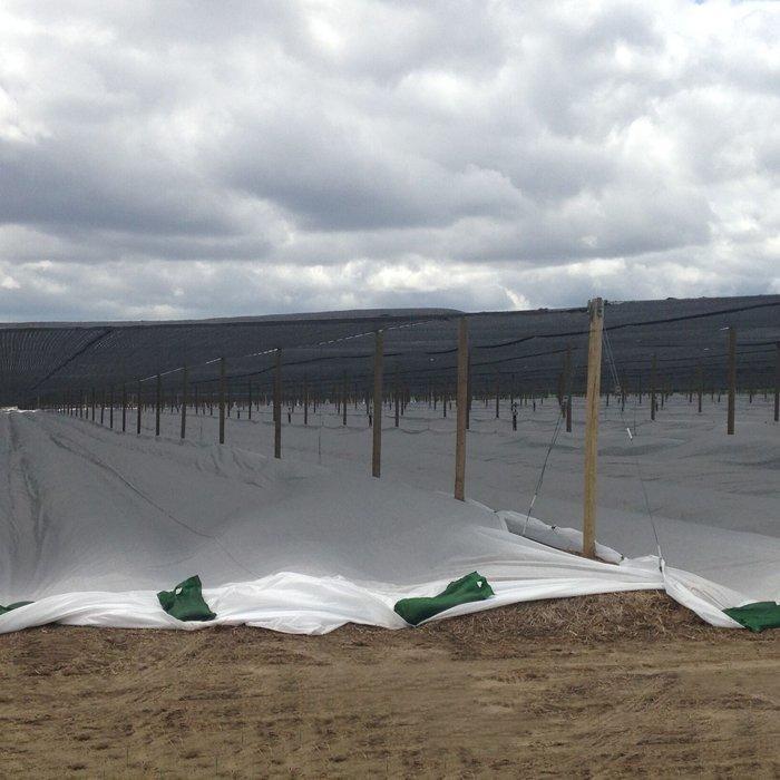 45m largeur de l'agriculture non-tissé feuille polaire