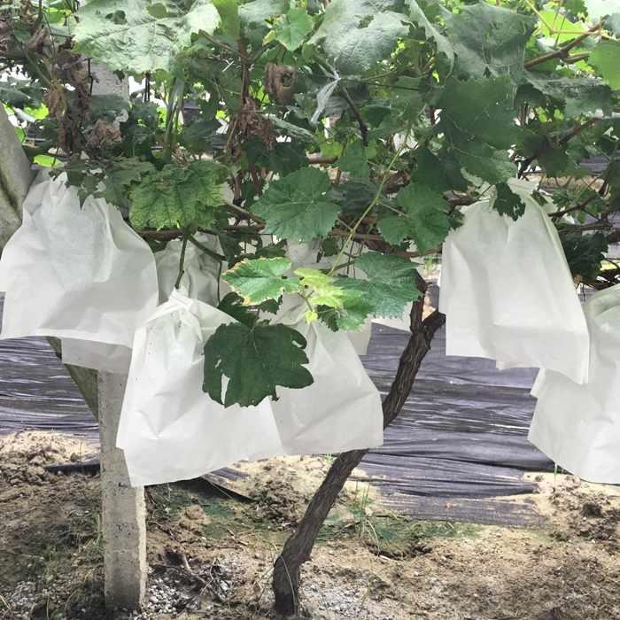 2016 الساخن بيع غطاء حماية النبات غير المنسوجة النسيج