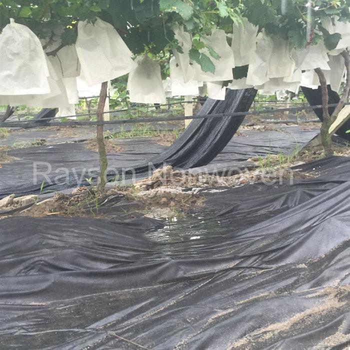 PP Tissu non-tissé de Spunbond avec UV produits pour le jardin et l'Agriculture