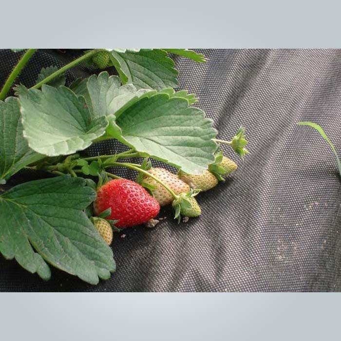 UV Schutz nicht gewebt Weed Control Stoff für Garten