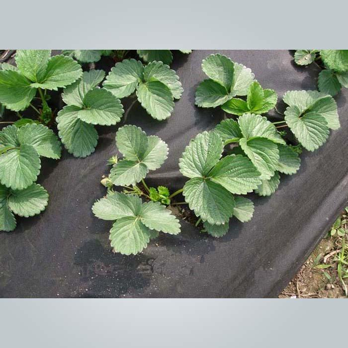 الأعشاب غير الانسجتي الأغشية القابلة للتحلل الحيوي النسيج الحاجز في لفة صغيرة