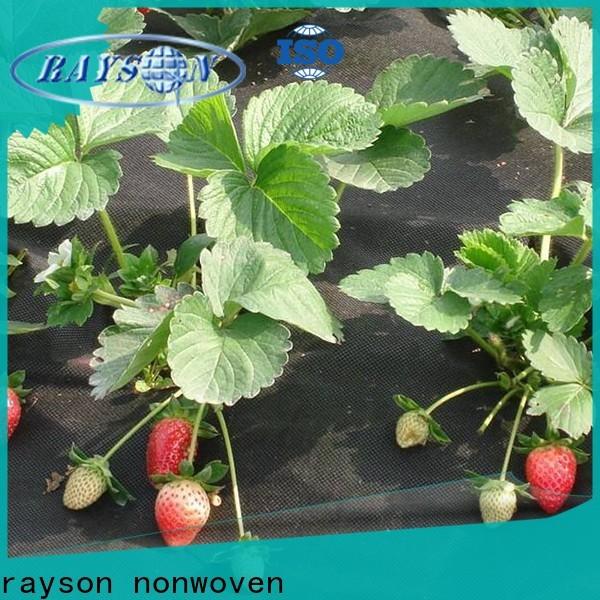 Rayson Vlies-Grüner Landschaftsstofflieferant