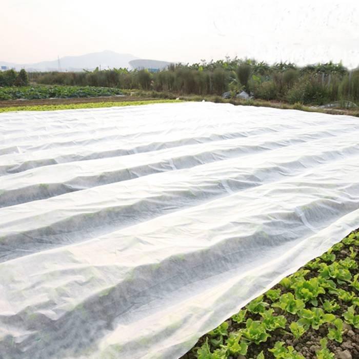 Cina Produttore Spunbond agricoltura non tessuto uso in Arabia Saudita