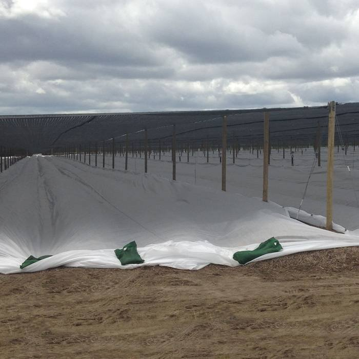 Agricultura túnel pp no tejido farbic con Uv resistente