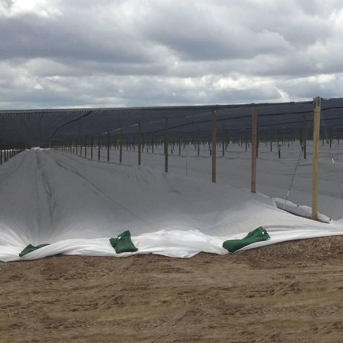 Landwirtschaftstunnel pp non woven farbic mit UV beständig