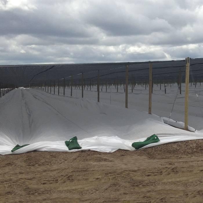 Funghione non tessuto con tunnel in agricoltura con resistente ai raggi UV