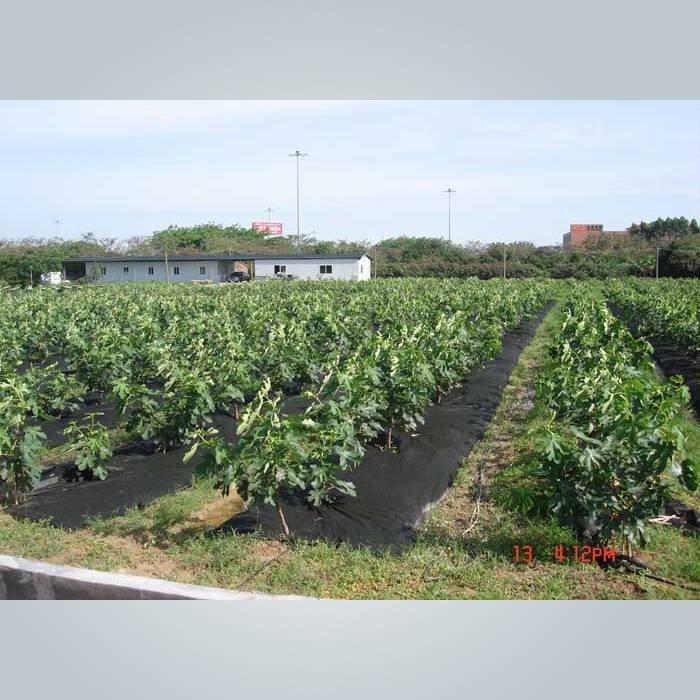 3 % UV-Schutz PPSB Unkraut Barriere Stoff für Garten