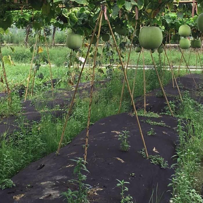 الزراعة 100٪ البوليستر البوليستر محبوكة النسيج لمكافحة الأعشاب الضارة