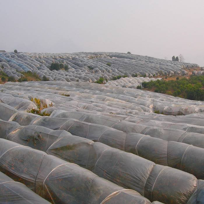 Fornecimento UV3% agricultura 100% tecido não tecido de polipropileno para mola a prova de plantas e enseadas