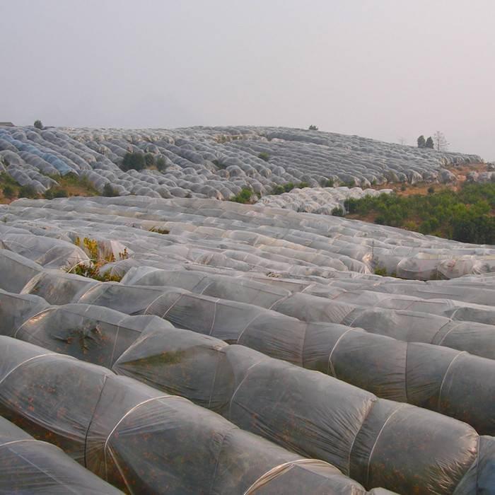 Suministre la tela no tejida del polipropileno de la agricultura 100% UV3 para la polilla y las calas de la planta