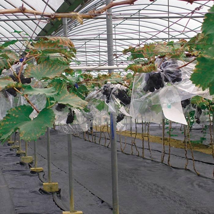 50/6070g 1.22m*50m black landscape agriculture fabric pp spunbonded nonwovens fabric