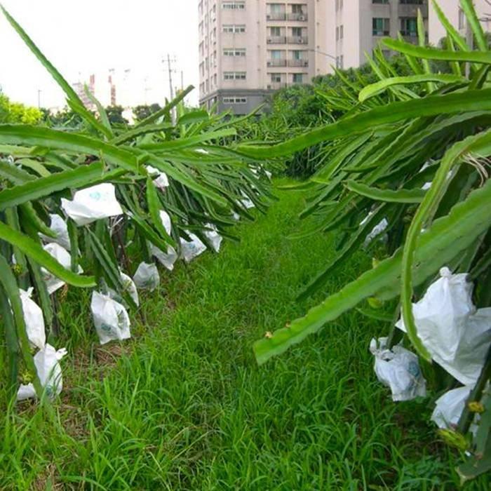 Bolsos no tejidos protegidos ULTRAVIOLETA antienvejecedores para el uso de la agricultura