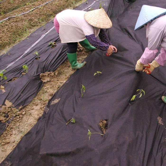 Esteras crudas del control de malas hierbas del material de los PP con anti edades para ajardinar