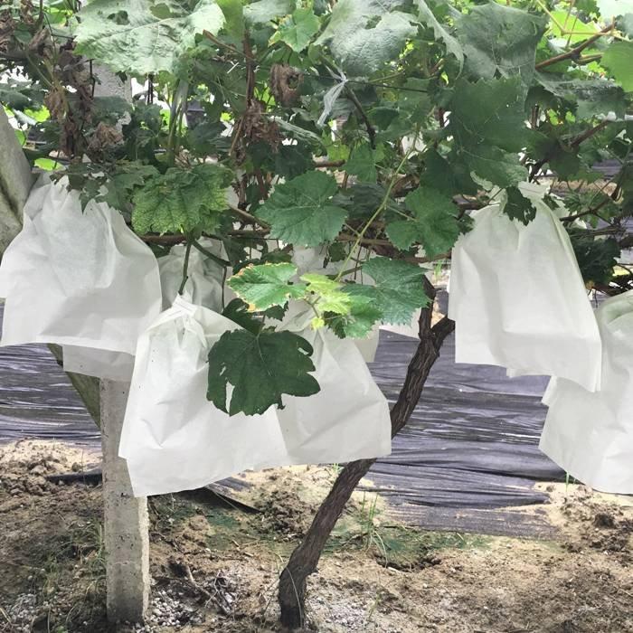 白い不織布の植物材料