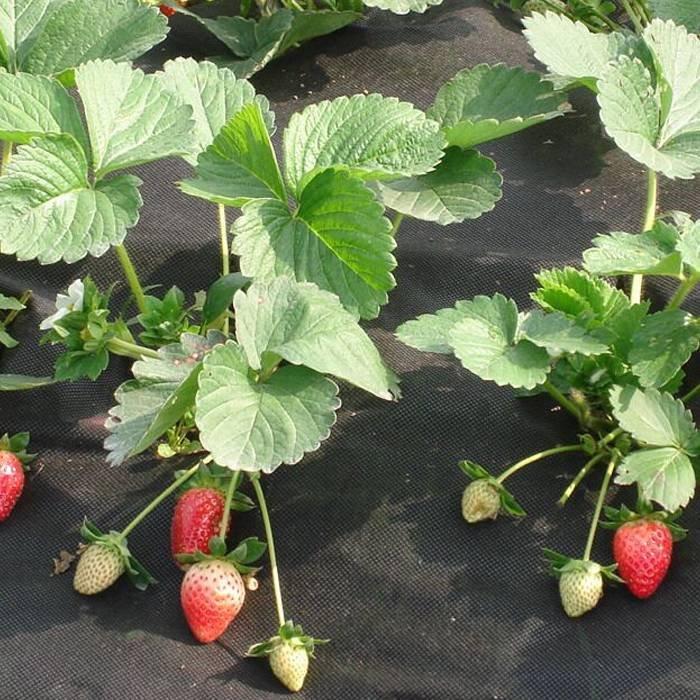 Борьба с сельскохозяйственными сорняками pp нетканый противотуманный мат