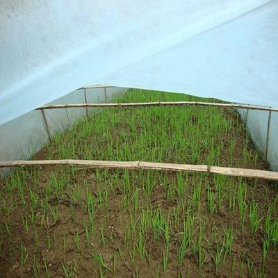 Vlies-Anpflanzungs-Wärmeschutzjacke